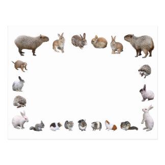 様々な小動物 VYKORT