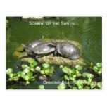 03-21-10 246, Ormond strand, Florida, Soakin upp… Vykort