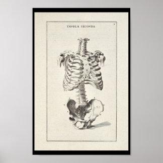 1691 skelett- konsttryck för konstnärlig anatomi poster