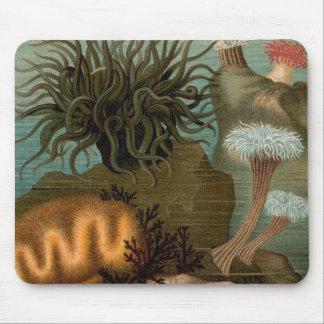 19th anemoner för århundradetryckhav musmatta