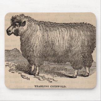 19th Cotswold för århundradetryckårsgammal Musmatta