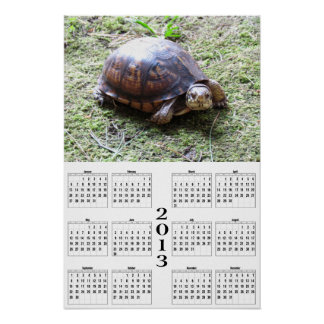 2013 kalender - sköldpadda på Moss Affisch