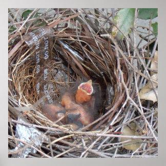3 nyfödda bebisfåglar i en bygga bo med tar inte posters