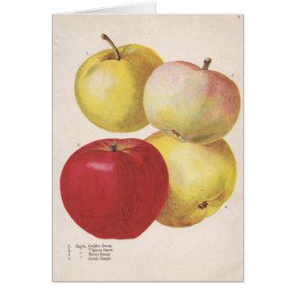 4 illustrerat kort för vintage äpplen