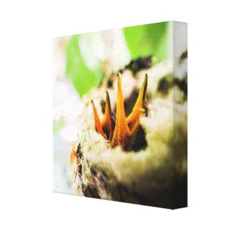6 gammala Rufous Hummingbirdbabyar för dag Canvastryck