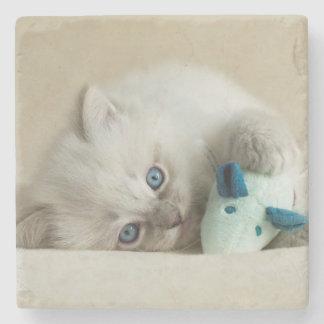 6 vecka gammal Ragdoll kattunge Stenunderlägg