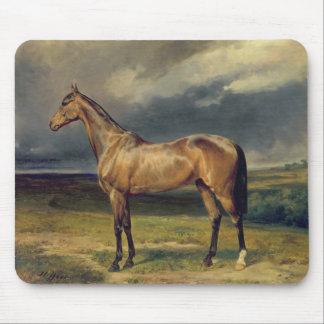 Abdul Medschid den kastanjebruna arabiska hästen,  Musmatta