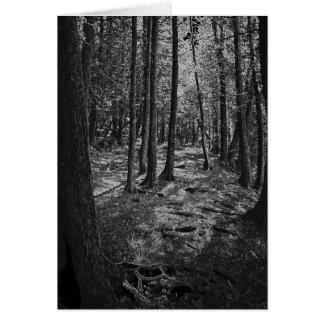 Abstrakt skog OBS kort
