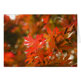 Acer löv hälsningskort