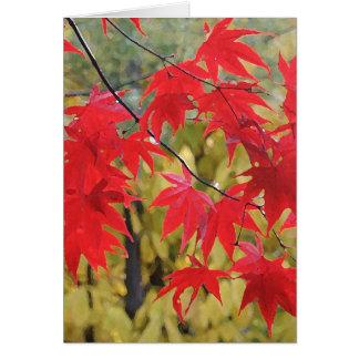 Acer palmatum 'Fireglow Hälsningskort