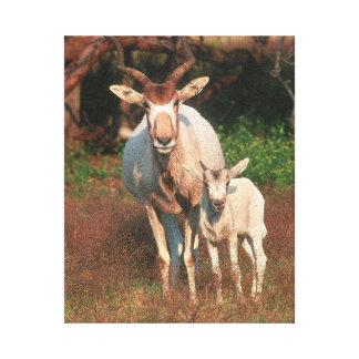Addax/vitantilop/Screwhorne antilop Canvastryck