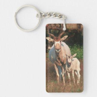Addax/vitantilop/Screwhorne antilop Nyckelring