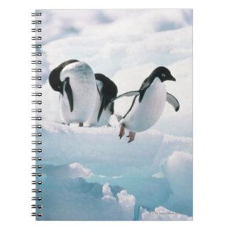 Adelie pingvin (pygoscelisadeliae) Antarktis Anteckningsbok Med Spiral