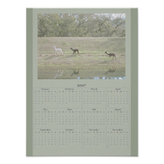 Affisch - Alpacakalender 2017 Poster