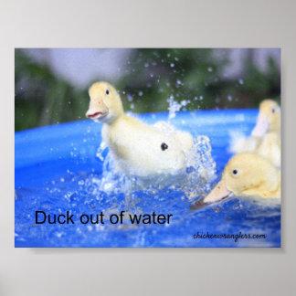 """Affisch """"anka ut ur vatten """", poster"""
