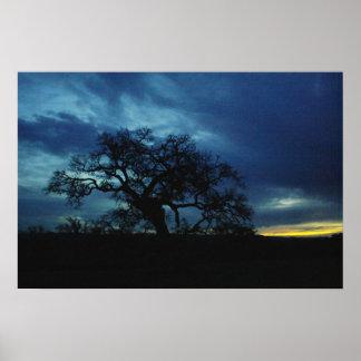 Affisch av oaken på solnedgången