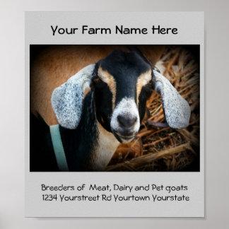 Affisch för annonsering för getavelsdjuraffär