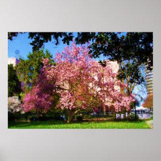 Affisch för Magnolia tre