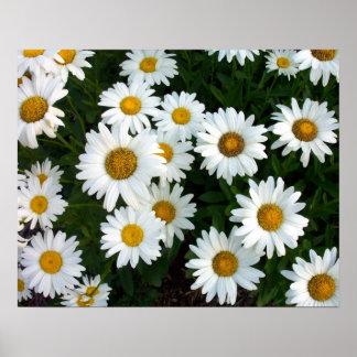 Affisch för sommar för Shasta daisy
