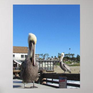 Affisch - pelikan på pir poster