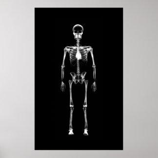 Affischen - röntga vit för svarten för poster