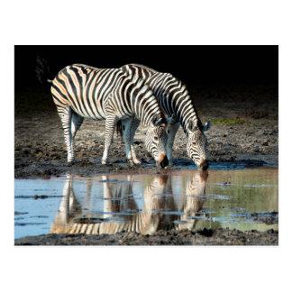 Afrika Botswana, Okavango delta, Davison läger Vykort