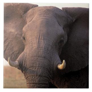 Afrika Botswana, Okavango delta. Elefant Kakelplatta