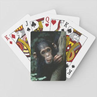 Afrika East Africa, Tanzania, Gombe medborgare Spelkort