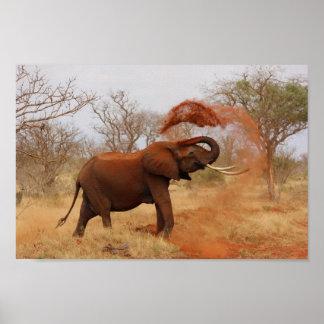 Afrika - elefant poster