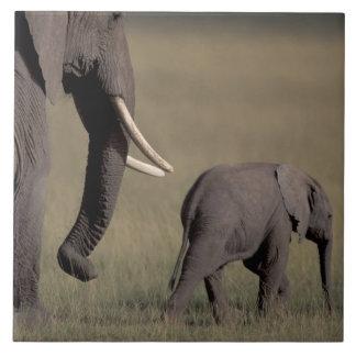 Afrika Kenya, Amboseli nationalpark. Afrikan Kakelplatta