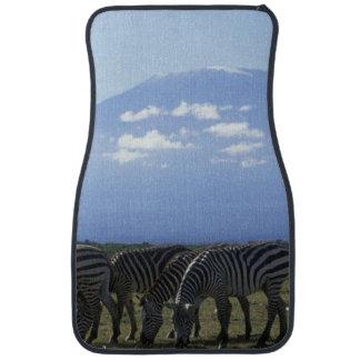 Afrika Kenya, Amboseli nationalpark, flock av Bilmatta