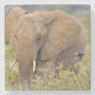 Afrika. Kenya. Elefant på Samburu NP. Stenunderlägg