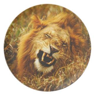 Afrika Kenya, Maasai Mara. Lejon manlig. Vild Tallrik