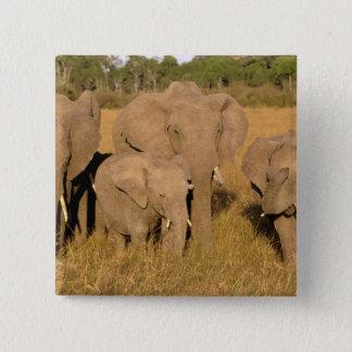 Afrika Kenya, Masai Mara. Afrikansk elefant Standard Kanpp Fyrkantig 5.1 Cm