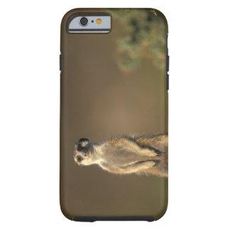 Afrika Namibia, Keetmanshoop, Meerkat (Suricate Tough iPhone 6 Fodral