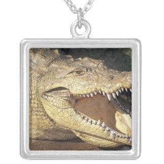 Afrika Sydafrika Nile krokodil Silverpläterat Halsband