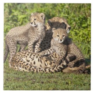 Afrika. Tanzania. Cheetahmor och ungar Kakelplatta