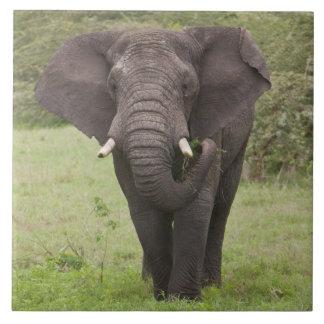 Afrika. Tanzania. Elefant på den Ngorongoro krater Kakelplatta