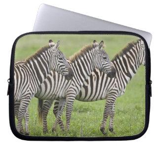 Afrika. Tanzania. Zebror på den Ngorongoro krater  Laptopskydd Fodral