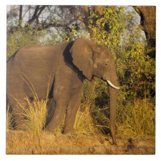Afrika Zimbabwe, Victoria Falls medborgarePark. Kakelplatta