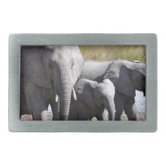 Afrikaelefantflockar
