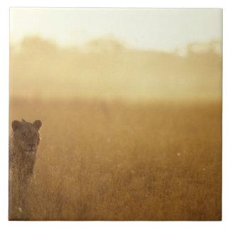 Afrikan Botswana, den Moremi leken reserverar, den Kakelplatta
