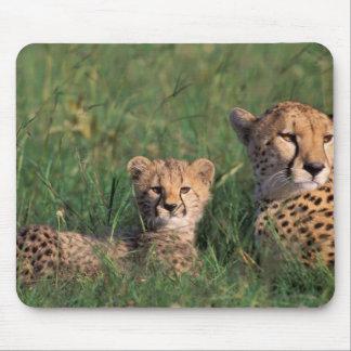 Afrikan Kenya, den MasaiMara leken reserverar. Che Musmatta