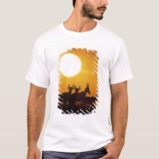 Afrikan Kenya, den MasaiMara leken reserverar, T-shirts