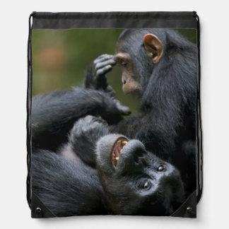 Afrikan Uganda, den Kibale skogen reserverar, Gympapåse