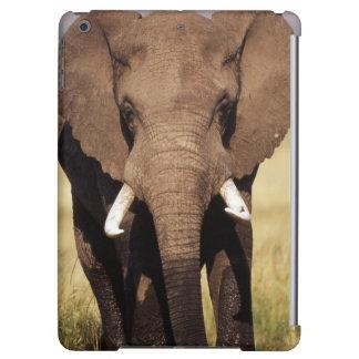 Afrikansk Bush elefant