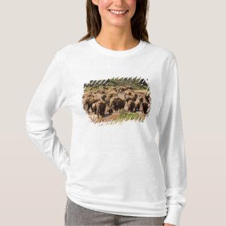 Afrikansk elefant, Loxodontaafricana som korsar Tee Shirts