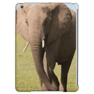 Afrikansk elefant (loxodontaen Africana), Maasai