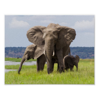 Afrikansk elefantfamilj, Botswana, affisch