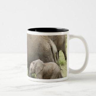 Afrikansk elefantflock, Loxodontaafricana, 3 Två-Tonad Mugg